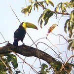 Toucan spotted while on a morning bird walk