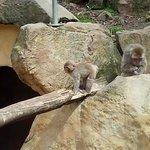 gorgeous baby monkey