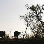 Elephants against the sunset during bush sundowner stop