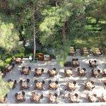 Palmariva Club Festival (ресторан)