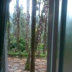 Trees outside Room
