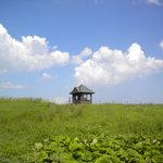 牧草地とハウス