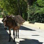 In the next village - Jimera de Libar
