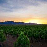 Flying Leap Block 1 Vineyard - Cochise County, Arizona