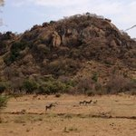 View from the terrace of the restaurant - kudu, impala and zebra