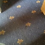 Another section of filthy carpet