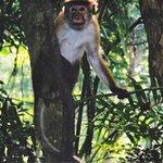 Monkey Peeping