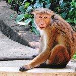 Monkey undicided