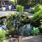 Pond in the backyard