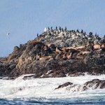 Large Sea Lion Colony
