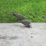 birds outside deck