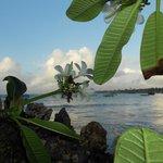 Flora sulla spiaggia