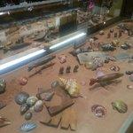 Chocolate Under-the-Sea Display
