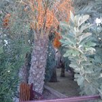 Растительность при отеле