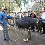 Guided tour at Cango Ostrich and Butterfly farm