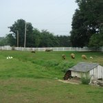 08/10 still have some farm animals