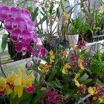 Далат, парк цветов