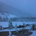Racine con la neve