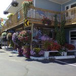 The motel and the flowers