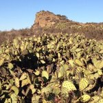 Beautiful cacti line the Stagecoach Bluff Trail