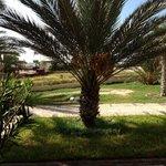 Die Palme vor meinem Zimmer