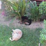 einige der ständig anwesenden Hunde