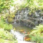 The fish pond near reception.