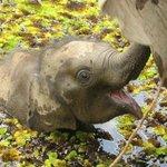 Gorgeous baby elephant