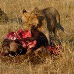 Löwe am Riss
