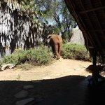 l'elefante
