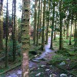 Hiking trail in Killarney national Park