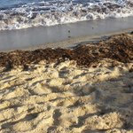 Sea water was black with waste
