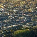 October salmon run at sooke potholes