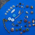 gevonden zeeschatten