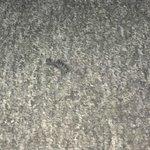 On Bedroom floor.Used false eyelash