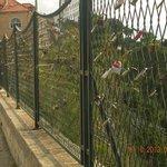 Lots of padlocks on the fences !