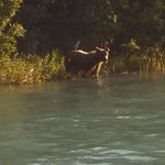 Who was watching who???  On the Kenai river