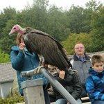 Adlerwarte Berlebeck vulture interacting with audience