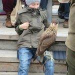 Adlerwarte Berlebeck bird visiting boy in audience