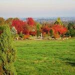 Garden view from the resort restarant