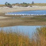 Sea Gulls Resting, Paine's Creek Brewster
