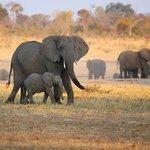 Elephants at Camp Waterhole