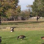 Geese on FE Warren.  October 2013
