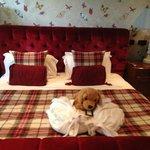 Guard dog and robes