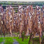 Fish drying plant
