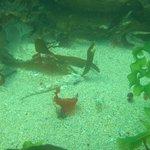Newquay Headland Dive