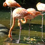 flamingo display