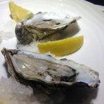 bordeaux oysters !