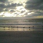 Birds @ Sunset