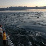 A dolphin encounter at sunset.